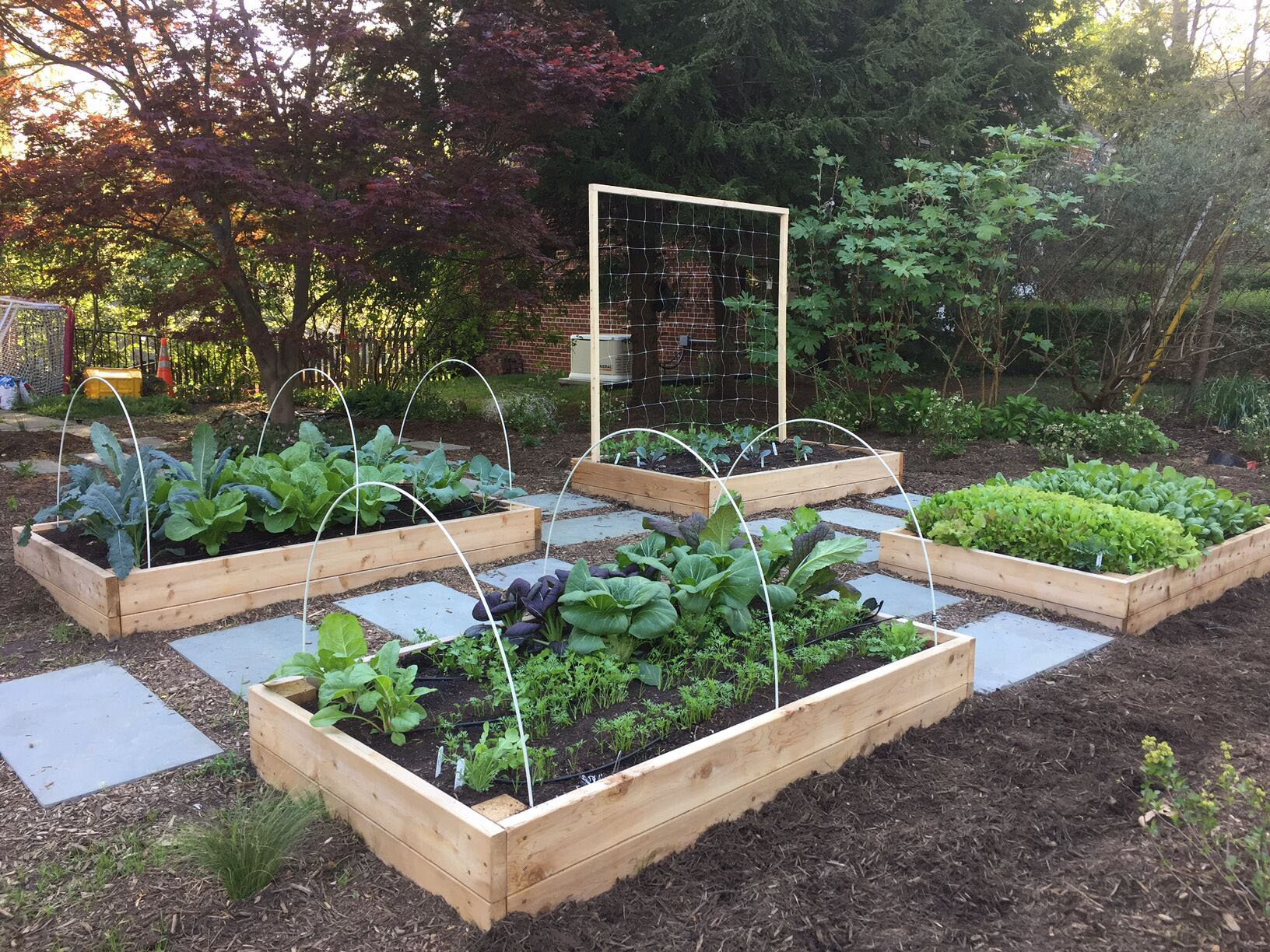 Backyard Gardening Ideas Sustainable America
